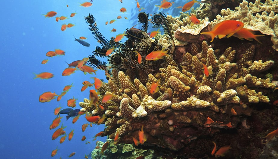 グローバル Desk_924x530px_SEE-Great-Barrier-Reef.jpg